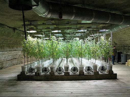 Cannabis plantage - Commercial grow room design plans ...